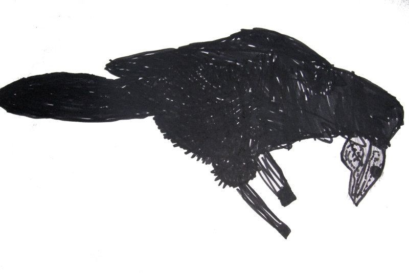 Preparatory drawing - Crow - Continuous line drawing, felt pen